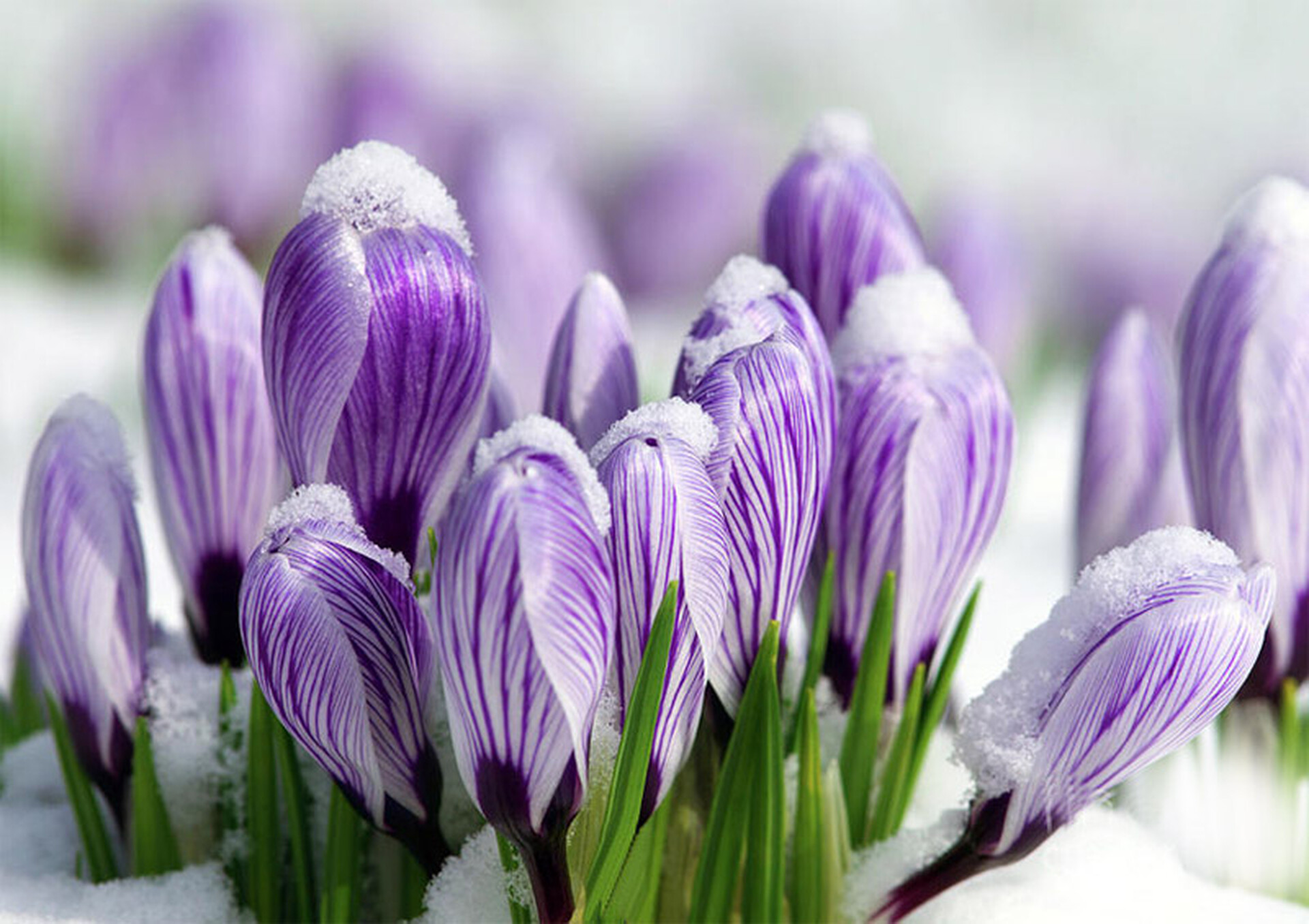 Открытки первые цветы весны, картинки